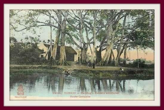 HẢI PHÒNG-dưới bóng cây đa