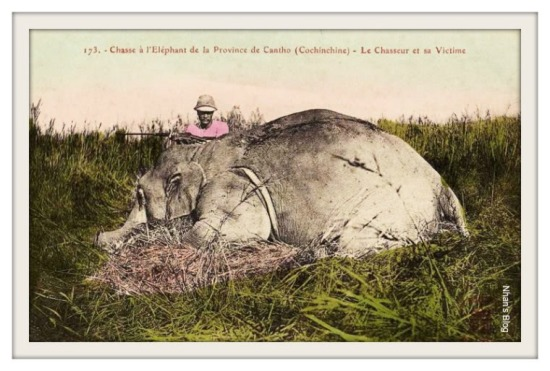 Săn voi ở Cần Thơ