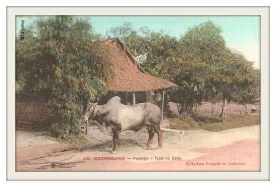 NAM BỘ-Làng quê Nam Bộ