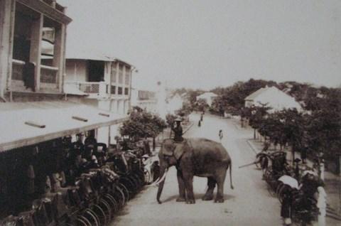 007.Còn đây là một ông Tượng - phương tiện đi lại của một ông quan cao cấp nào đó của triều đình Huế .