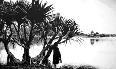013.Hồ Gươm,Bờ hồ Gươm với những cây cọ, cây dừa 2