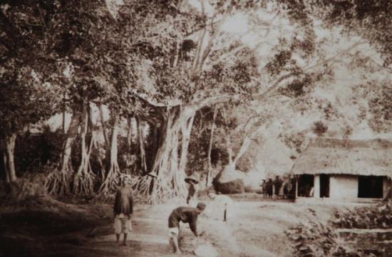 Khi người Pháp quy hoạch Hà Nội, nảy sinh xung đột giữa một bên là bảo tồn nơi thờ tự của người Việt với việc bảo tồn những cây cổ thụ và một bên là xây dựng đô thị kiểu châu Âu, du nhập các loại cây phù hợp. Sử chép rằng các quan chức cao cấp chủ trương tôn trọng tập quán thì các quan chức quản lý thành phố ưu tiên yếu tố hiện đại.