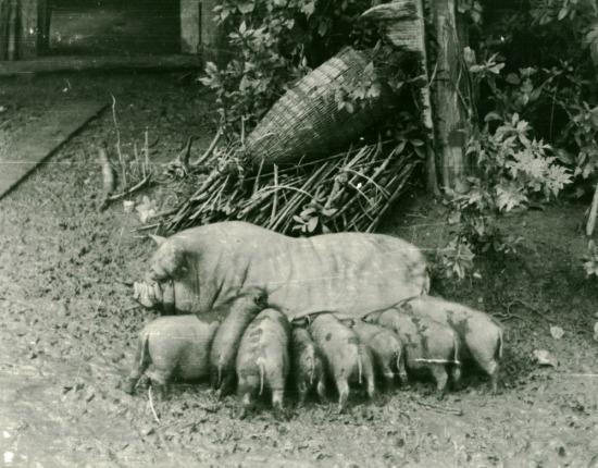030.Gia đình lợn xề.