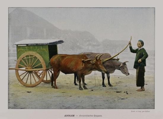 1898 Annam - Annamese cart