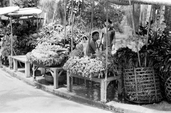 HANOI 1940 - Vendor selling plants and flowers