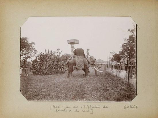 009.Hue (1896-1900) – un des éléphants de parole à la cour