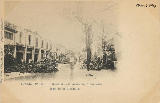 1011. Người dân đứng nhìn cây đổ chắn lối trên phố Đường Thành (Rue de la Citadelle)