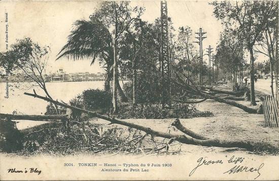 3001. Hàng cây bật gốc bên hồ Gươm phía trước nhà bưu điện