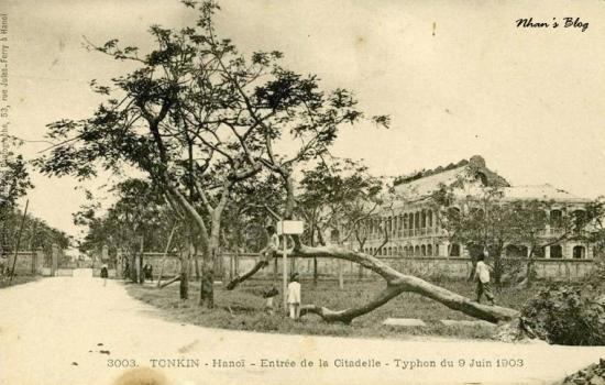 3003. Trẻ con leo trèo trên cây cổ trước lối vào doanh trại lính Pháp trong thành (phố Nguyễn Tri Phương)