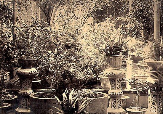056.Một vườn cây ở Hà Nội
