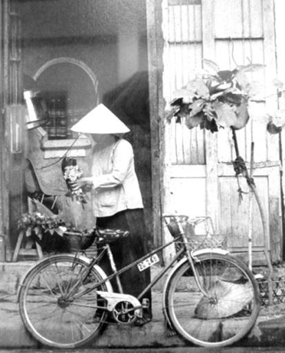 018.Chiếc xe đạp và cây bàng non