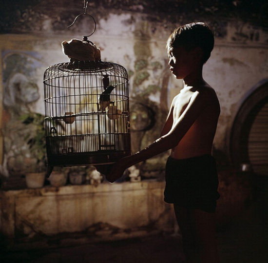 Cậu bé và chiếc lồng chim. Chơi chim cảnh là thú vui của nhiều gia đình người Hoa.