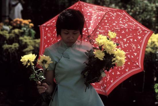 Một thiếu nữ cầm những đóa cúc vàng trên đường Nguyễn Huệ, TP. HCM, nơi bày bán hoa Tết theo truyền thống.