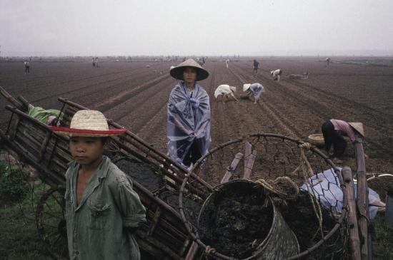 Trên một cánh đồng ở Hà Nội.