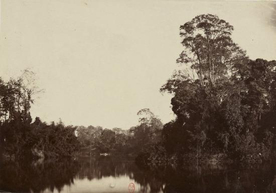 Rừng rậm bên sông Sài Gòn.