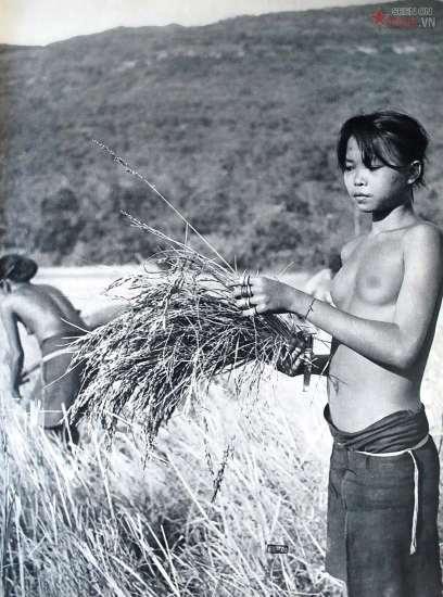 Phụ nữ dân tộc thiểu số ở Tây Nguyên trồng lúa, ngô trên nương rẫy để bảo đảm nguồn lương thực.