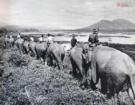 Một đội voi của người  Lào.