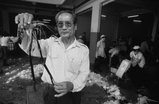 Ông Nguyễn Văn Thành, phó giám đốc nhà máy Thực phẩm đông lạnh số 1 cầm trên tay một con tôm càng dài 30cm. Đây là một mặt hàng xuất khẩu chủ lực của nhà máy, thu hút sự quan tâm của nhiều đối tác nước ngoài.