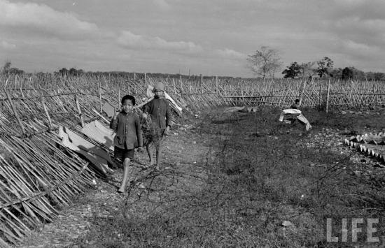Trẻ em nhặt củi phục vụ quân Pháp.