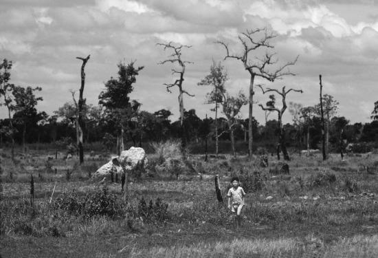 Cây rừng bị thiêu rụi để người dân làm nương rẫy. Những thân cây khô sau đó sẽ được tận dụng để làm củi.