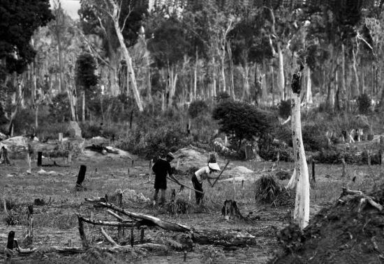 Người dân làm nông nghiệp trên những khoảng rừng bị đốt trụi.