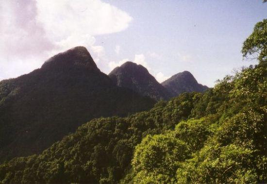 Rừng núi Tam Đảo.