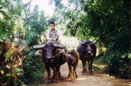 Chàng cao bồi nhí của  Việt Nam.