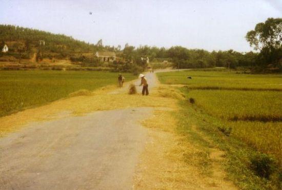 Phơi rơm trên đường làng.