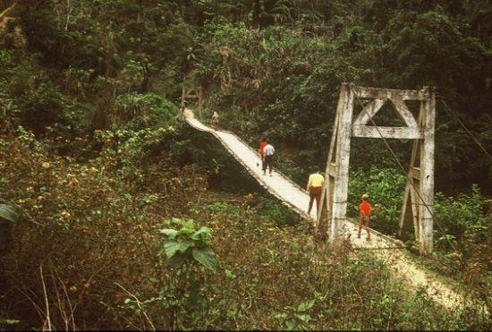 Một chiếc cầu treo trong rừng ở Phú Xá.