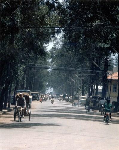 Một con đường rợp bóng cây.