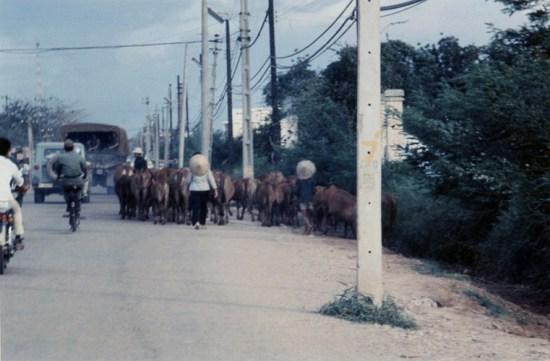 Một đàn bò.