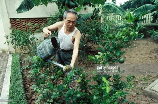 Đại tướng chăm sóc cây cối trong vườn nhà.