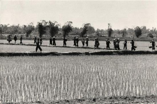 Nông dân Thái Bình ra đồng làm việc sau giờ nghỉ trưa. Tỉnh Thái Bình là một vựa lúa quan trọng của miền Bắc Việt Nam thời kháng chiến chống Mỹ.