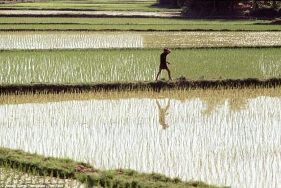 Ngoài ra, trong thời gian tham chiến ở Việt Nam, ông Hensinger cũng ghi lại được những hình ảnh đẹp của làng quê Việt Nam.
