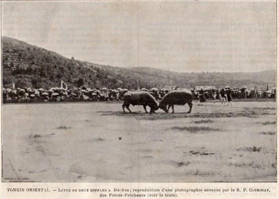 Cuộc đấu của hai Ông trâu trong lễ hội chọi trâu Đồ Sơn năm 1893.