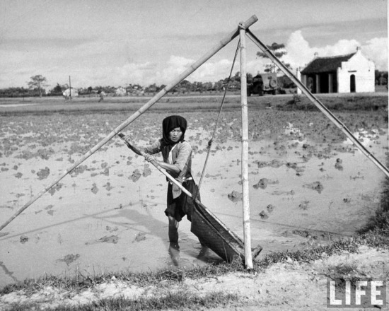 Một người phụ nữ tát nước trên thửa ruộng của mình.