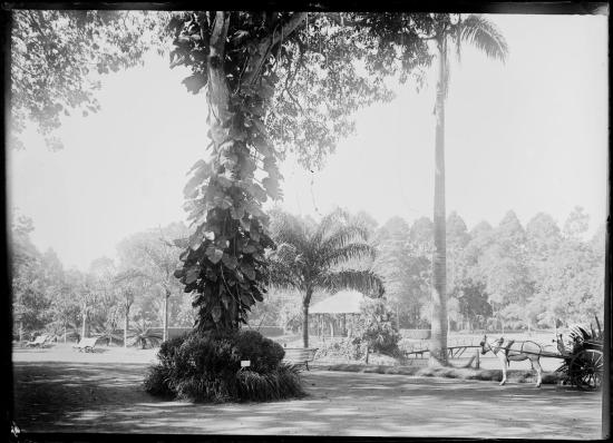 Thảo Cầm Viên Sài Gòn, 1895.