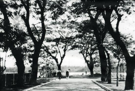 Một con đường rợp bóng cây xanh.