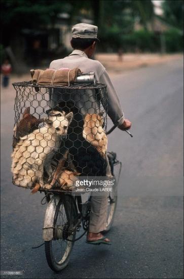 Người đàn ông chở những chú chó đến một quán thịt chó trong thành phố.