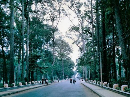 Con đường chạy qua công viên Tao Đàn.