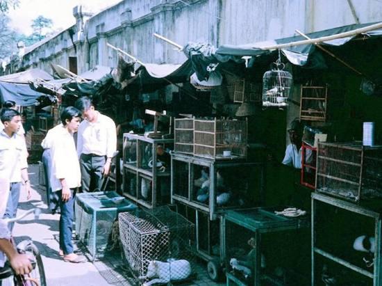Chợ bán động vật.
