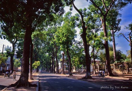 Hàng cây trên đường Tôn Đức Thắng, 1989.
