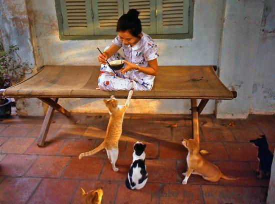 Bữa trưa của cô gái và đàn vật cưng, 1990.