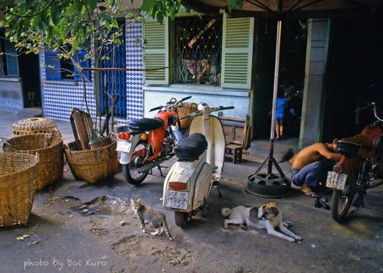Chó, mòe và những chiếc xe máy.