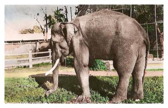 Tên gọi ban đầu của nơi này là Vườn Bách Thảo, còn người dân quen gọi Sở thú. Đến năm 1956 Thảo Cầm Viên mới trở thành tên gọi chính thức.
