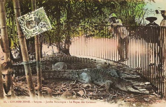 Chuồng nuôi cá sấu.