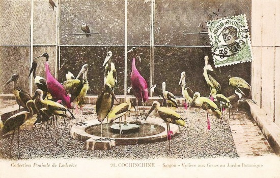 Chuồng nuôi nhiều loại chim.