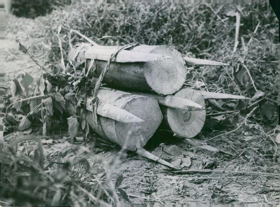 Một loại bẫy chông treo dùng để thả từ trên cây xuống của quân đội Giải phóng, 1964.