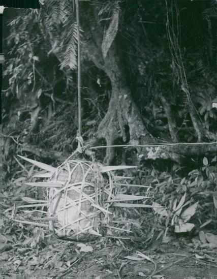 Bẫy chông treo dạng quả cầu gai thả theo phương ngang, 1964.